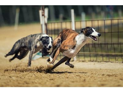 Shoalhaven Greyhound Racing Club